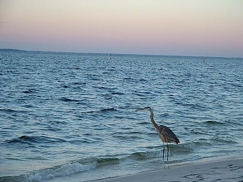 Florida_gulf_coast_8