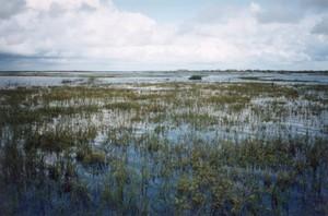 Armyhole_marsh