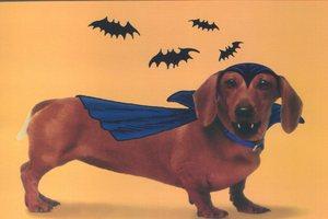 Halloweiner